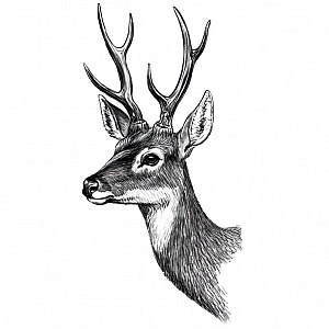 Временная татуировка «Black deer»